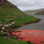 Stop Whales And Dolphins Massacre In Faroe Islands
